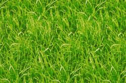 Dekostoff - Rasen - Grün