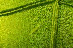 Folienstoff Schlange - Stretch - Hellgrün