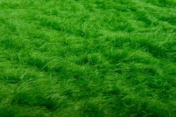Deko-Gras